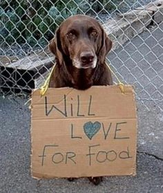Support your local animal shelter, adopt.