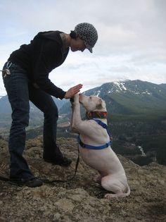 Pet safety - hiking