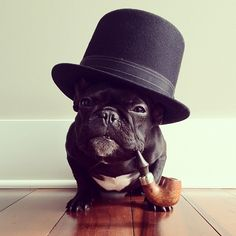 adorable! like a boss, funny dogs, french bulldogs, like a sir, pet, puppi, top hats, sherlock holmes, winston churchill