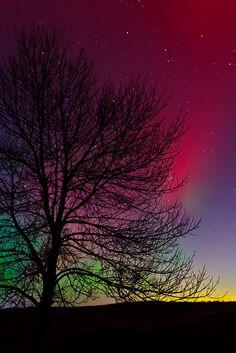Aurora Borealis sky, tree, color, northern lights, aurora borealis, natur, beauti, place, starry nights