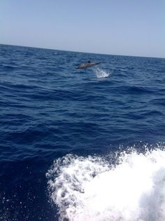 Aegean Sea dolphin :)