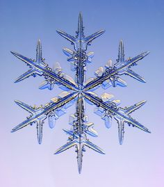 Snowflakes under microscope