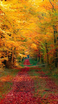 fall leaves, tree, season, autumn, color, path, forest, road, walk