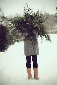 pines, holiday, wreath making, sweater, christmas time, winter, branch, christmas trees, diy christmas