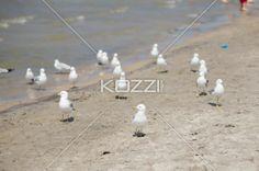birds at beach. - View of birds at beach.