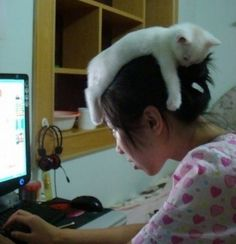 Cat working overtime as a hat. #Pets #CutePets #FunnyPets