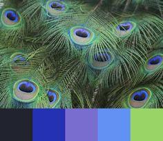 peacock feather color scheme