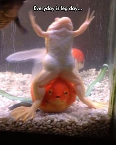 frog, dem leg