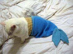 Poor kitty is a mermaid now. #cat #humor
