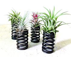 Tillandsia Air Plant Mini Recycled Coil Planters by DoodleBirdie