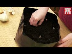 How to grow garlic in containers video with Thompson & Morgan