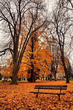 Beautiful Fall Leaves | #fall #autumn