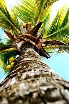 Palm Tree @ The Beach