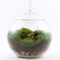 Uncharted Territory Terrarium now featured on Fab.