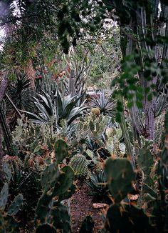 desert, palm springs, flower, botanical gardens