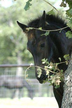 Equine love