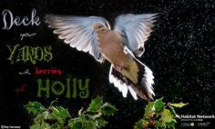"Happy ""Holly"" days!"