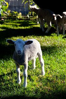 farm animals:)