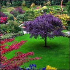 canada, victoria bc, tree, vibrant colors, gardens, modern garden design, flowers garden, backyards, british columbia
