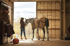 Top 10 Most Common Horse and Pony Buying Mistakes