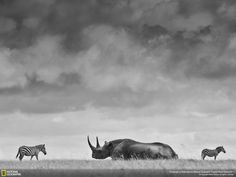 The 35 Most Spectacular Wildlife Photos From The National Geographic Photo Contest
