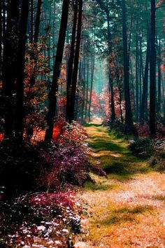 forests, tree, path, natur, magical forest, beauti, magic forest, place, poland