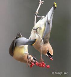 Interactive bird website