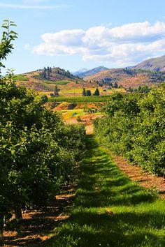 Orchards of Washington State.