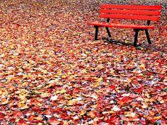 autumn leaves<3