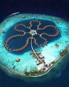 Ocean flowers, Maldives