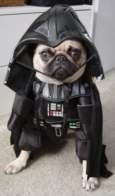 Pugs + Star Wars= AWESOME!