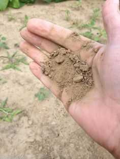 Covering (purchased) garden soil quality guidelines on #groundchat this Friday, May 9 at 2 pm EST. Join us!