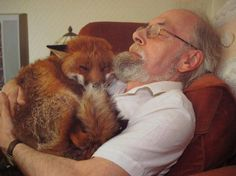 A very compassionate man and a loving beautiful fox.   Six years ago, Cropper was found in the street after a fight with dogs. Seriously injured and ill (toxoplasmosis), Cropper was nursed back to health by this man's patience, love and determination. Not strong enough to return to the wild, Cropper spends very happy days with his human friend