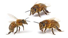 Easy ways to be hospitable to bees.