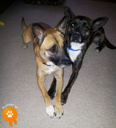"""Runner Up. Lucy and Jaxx, adopted from Greater Birmingham Humane Society - Birmingham, AL: """"We adopted Lucy and Jaxx together and already spoiled!"""""""