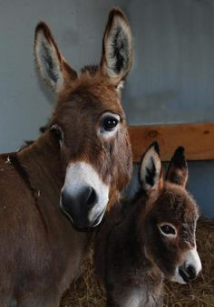 Donkey ~ With Her Young Foal.