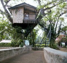 treehouse masters   ... tree house 6600 563 Tree   House = Pete Nelson, The Treehouse Guy