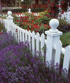 l love the lavender in front of the fence and the red roses behind