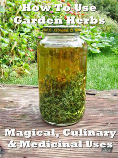 """Thyme Tincture, used to clear respiratory congestion and sore throats"