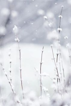 ♥ SNOW ♥