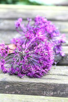 seidenfein 's Dekoblog: Lila Blüten & Blaubeer Cookies * purple flowers & blueberry cookies