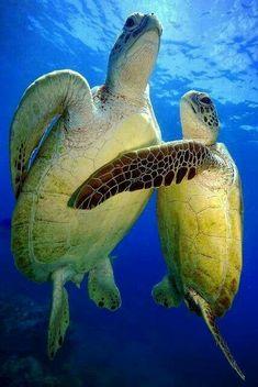 ... sea turtles.