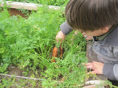 The Magic Onions :: A Waldorf Inspired Blog: Discovering Waldorf :: The Daily Rhythm in a Waldorf School