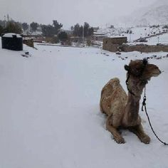 Snow Covers Egypt for First Time in 100 Years 12/13/2013