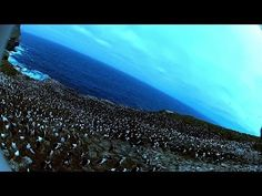 ▶ Amazing! Bird steals egg camera & films penguin colony from the air - YouTube
