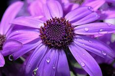 Tips on how to photograph flowers. Also, the video {at the bottom of the article} covers timing, lenses, depth of field, focus points, focus modes and some composition tips for capturing great macro and flower photographs.