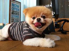 boo, cutebeauti anim, cutest dogs, ador anim