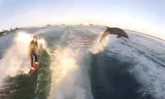 Surfing with dolphins. Win.
