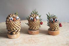 pine cone OWLS!
