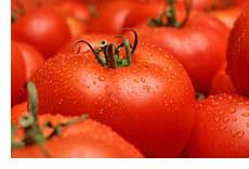 Growing Killer Tomatoes